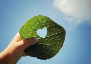 Onko puu lämmitysmuotona hiilineutraalia